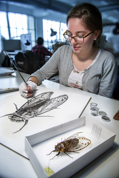 A student drawing an insect
