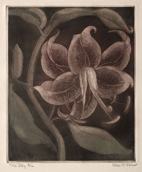 Elsa Christiana Vick Shaw '13 (American, 1891-1974). Painter, muralist, printmaker; on CIA faculty 1923-1931, 1940-1943. The Lily (c. 1933). Aquatint. The Cleveland Museum of Art, Gift of The Print Club of Cleveland 1933.103