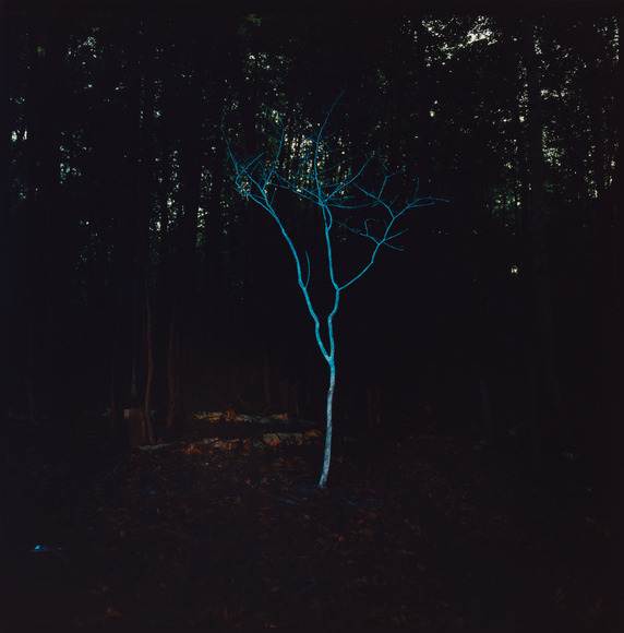 Barry T. Underwood (American, 1963-  ). Sculptor, installation artist; on CIA faculty 2000-present (2013). Little Blue Tree (2006). Chromogenic process color print, 60.8 x 50.7 cm. The Cleveland Museum of Art, Gift of Joanne and Margaret Cohen in honor of Tom Hinson 2011.105