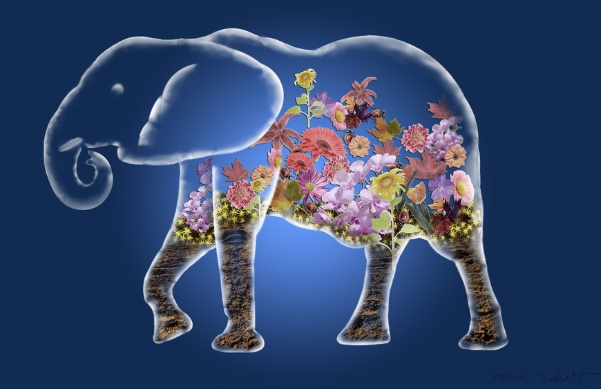 <strong>Elephant Terrarium - Honorable Mention, Visual Arts Category </strong><br />Jacob  Fakult, Junior<br />University School; Hometown: Willoughby Hills, OH