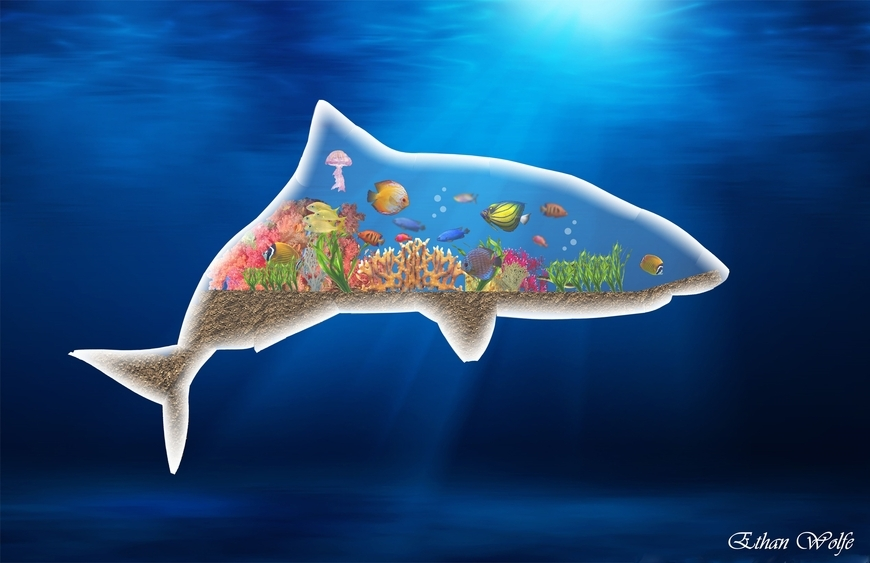 <strong>Shark Tank - Honorable Mention, Design</strong><br />Ethan  Wolfe, Junior<br />University School; Hometown: Chardon, OH