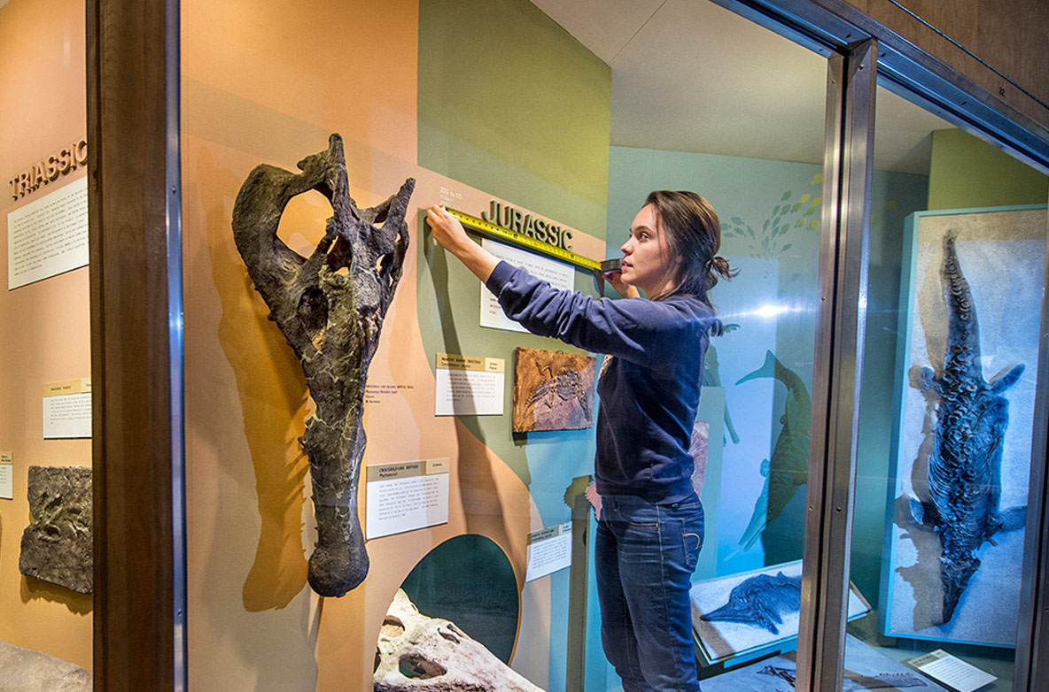 Student internship: Marcella Verchio at CMNH